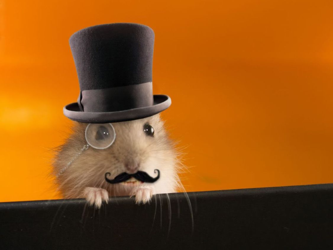 Download free HD Funny Posh Hamster Wallpaper, image