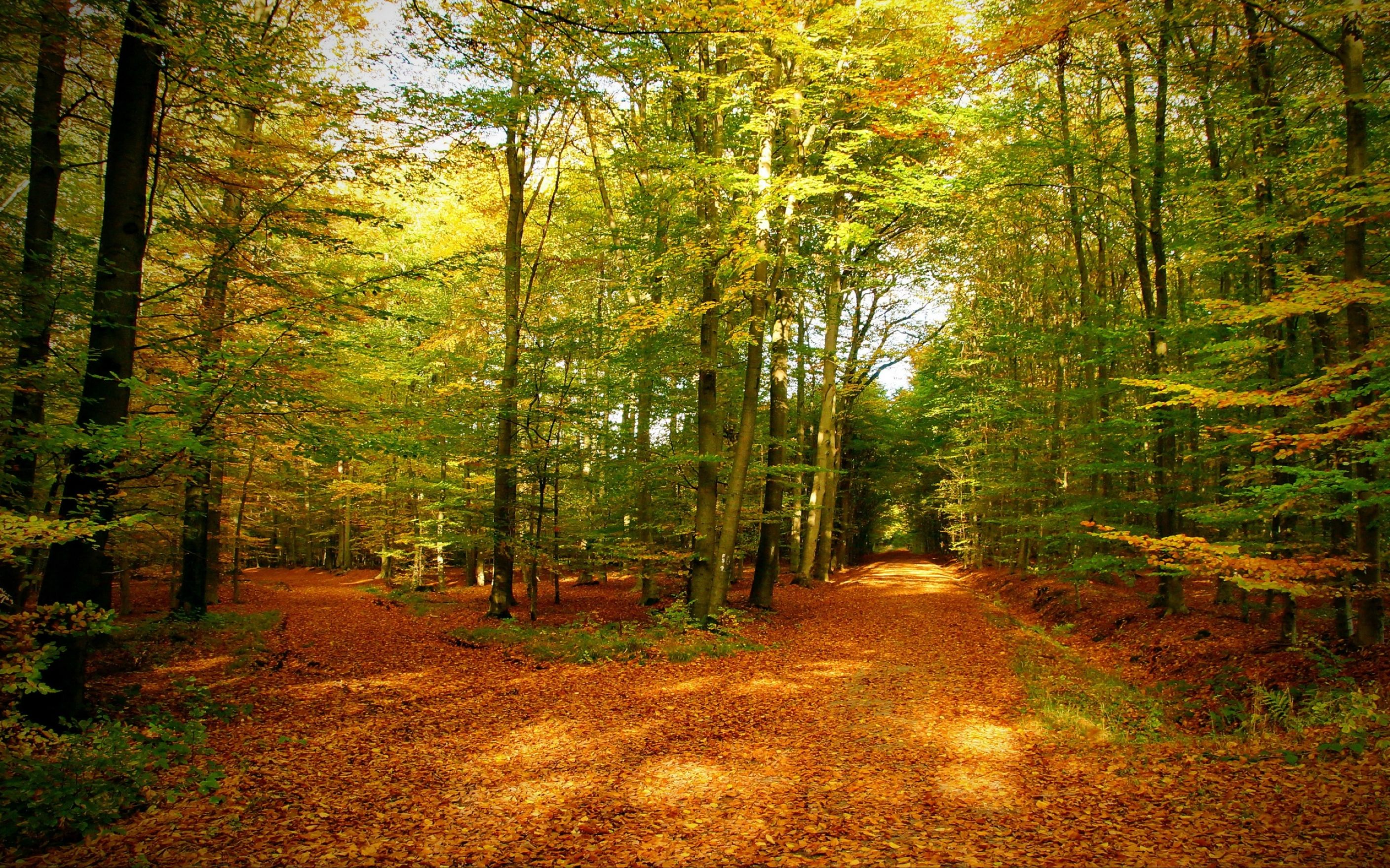 Download free HD Gold Autumn Forest Wallpaper, image