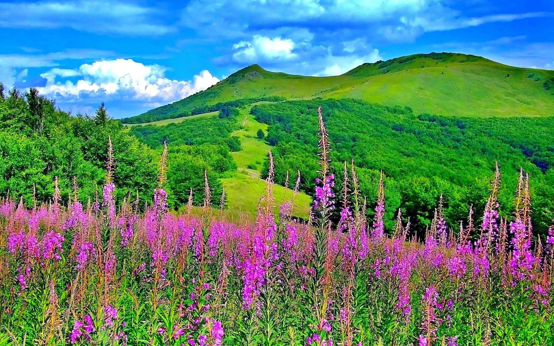 Green Mountain Flowers Trees Nature Wallpaper