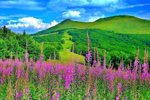 Download Green Mountain Flowers Trees Nature Wallpaper Free Wallpaper on dailyhdwallpaper.com