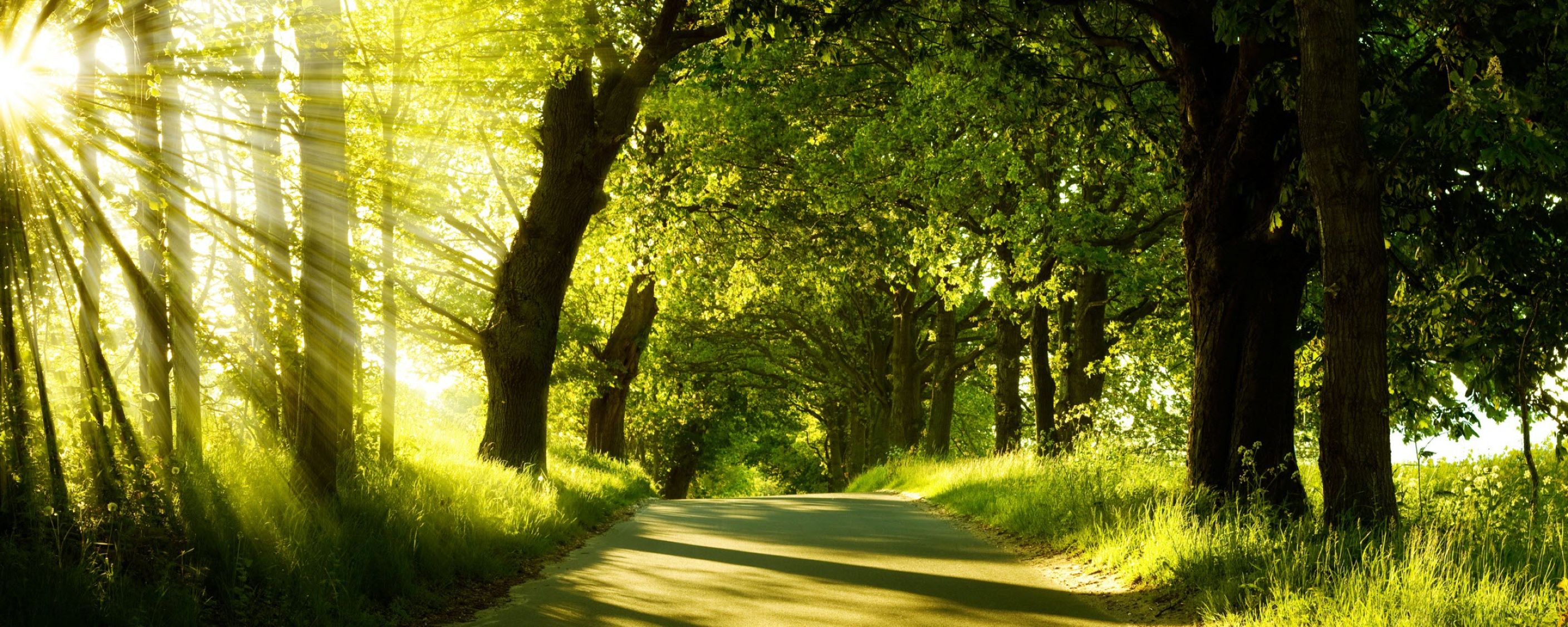 Download free HD Green Nature Dual Monitor Wallpaper, image