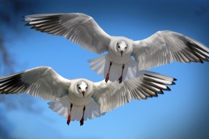 Gulls Seabirds HD Wallpaper