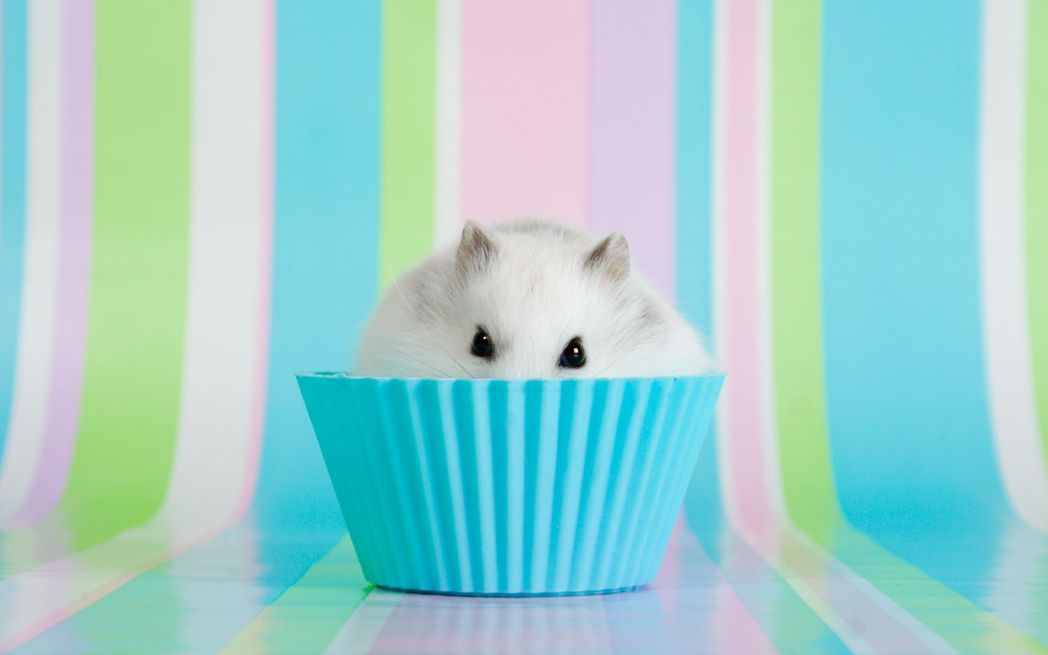 Download free HD Hamster 1920×1200 Wallpaper, image
