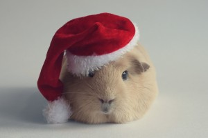 Download Hamster Christmas Computer Wallpaper Free Wallpaper on dailyhdwallpaper.com