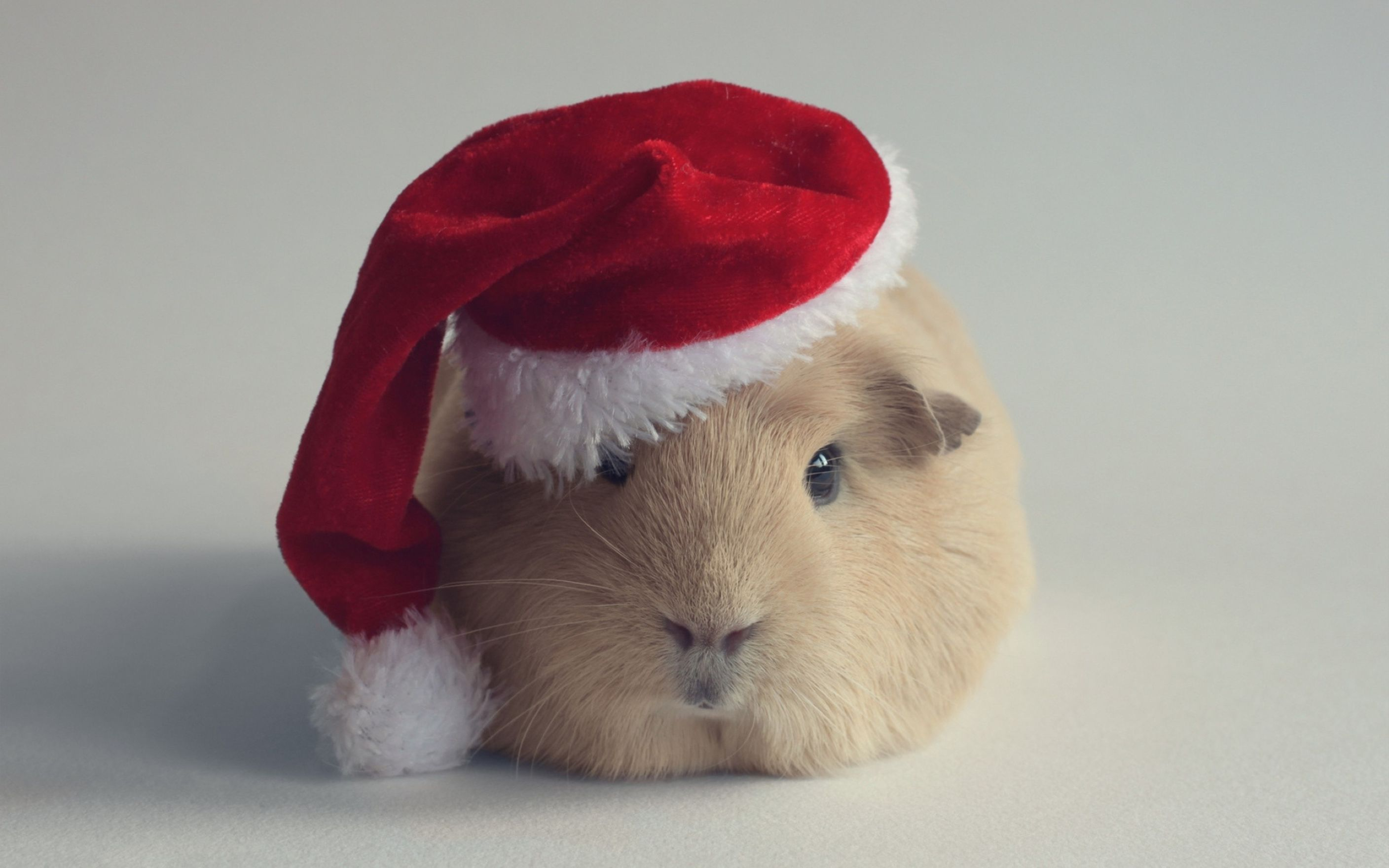Download free HD Hamster Christmas Computer Wallpaper, image