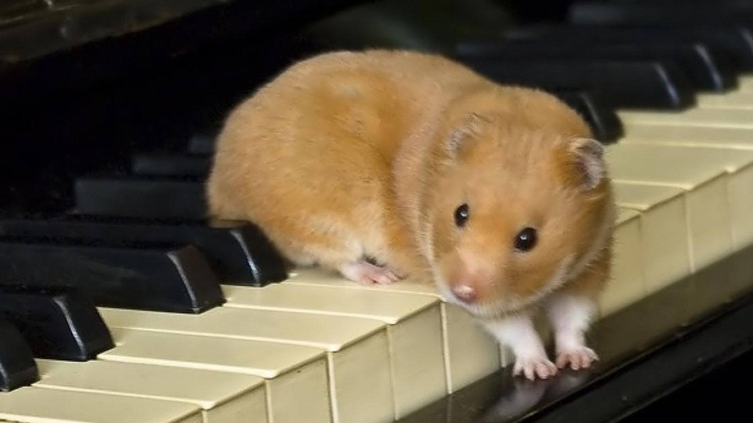 Download free HD Hamster Computer 1366×768 Wallpaper, image