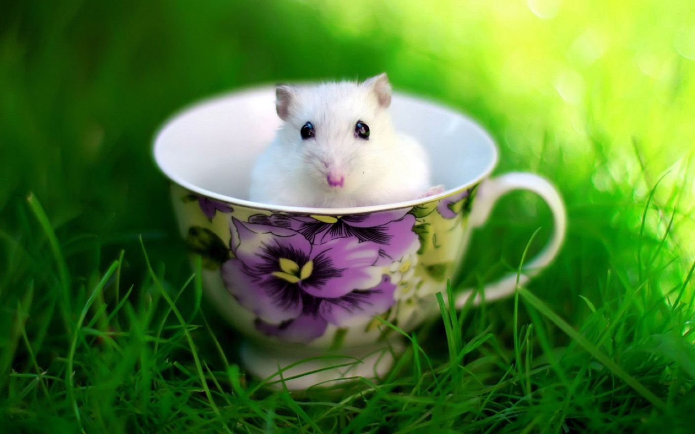 Download free HD Hamster Desktop 1280×800 Wallpaper, image