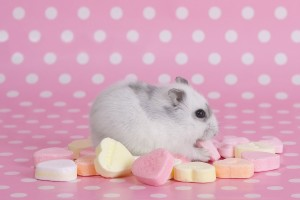 Download Hamster Desktop Pink Wallpaper Free Wallpaper on dailyhdwallpaper.com