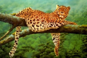 Leoparden Leopard Normal Wallpaper