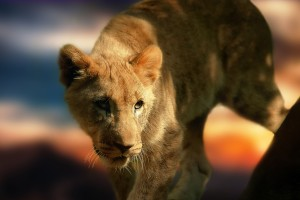 Download Lion Cub HD Wallpaper Free Wallpaper on dailyhdwallpaper.com
