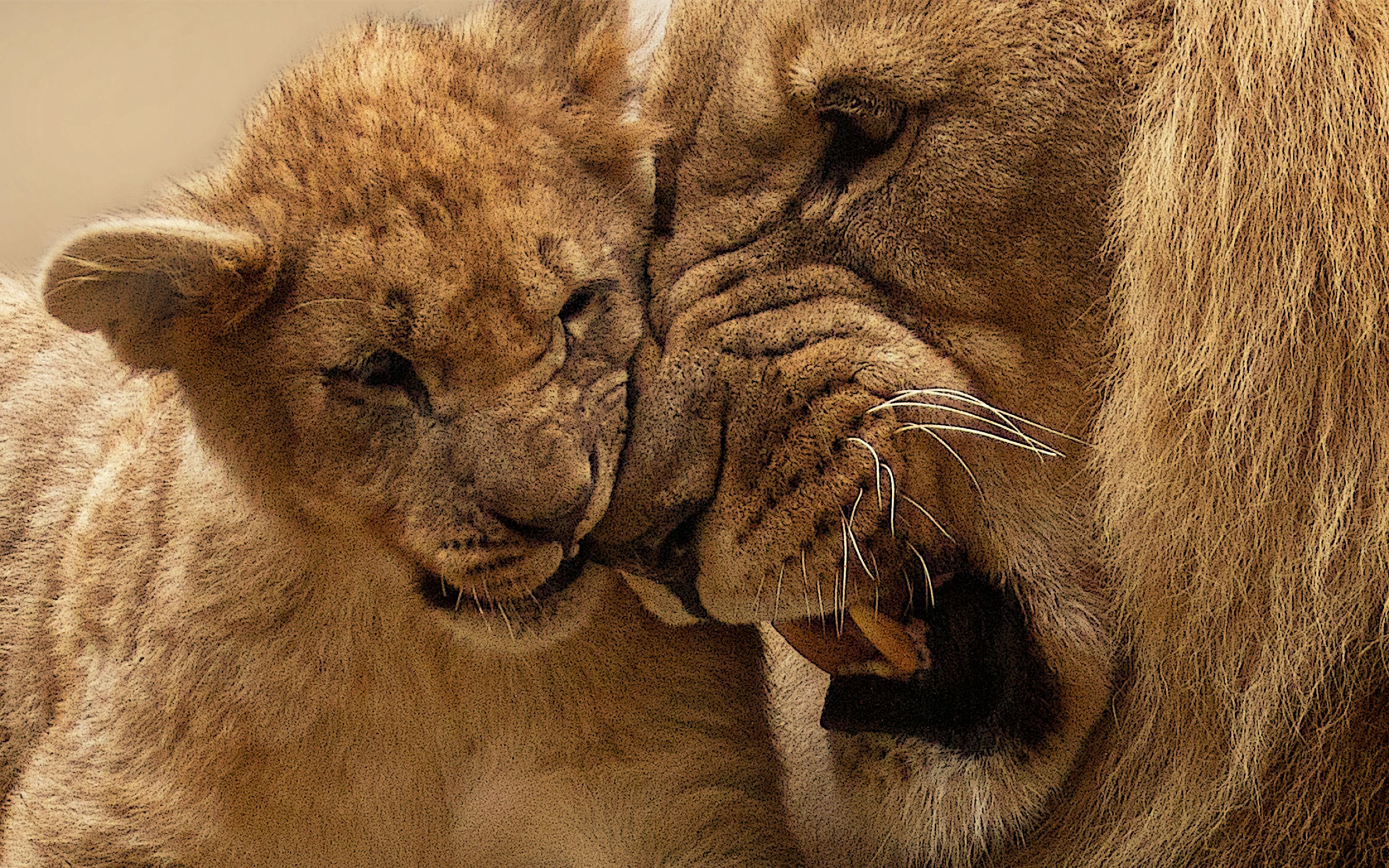 Download free HD Lion Mother Cub Wide Wallpaper, image