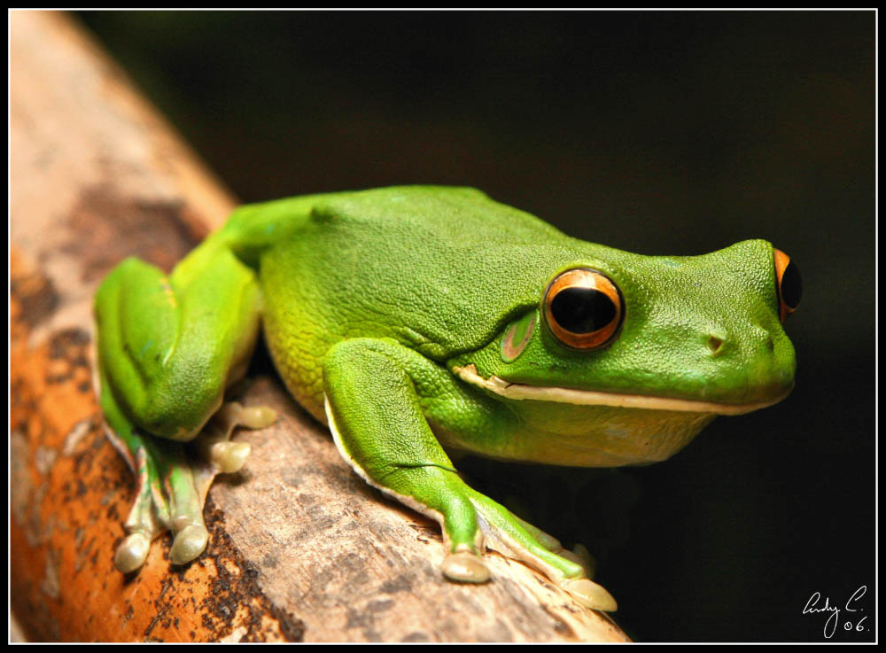 Best Green Frog Photo