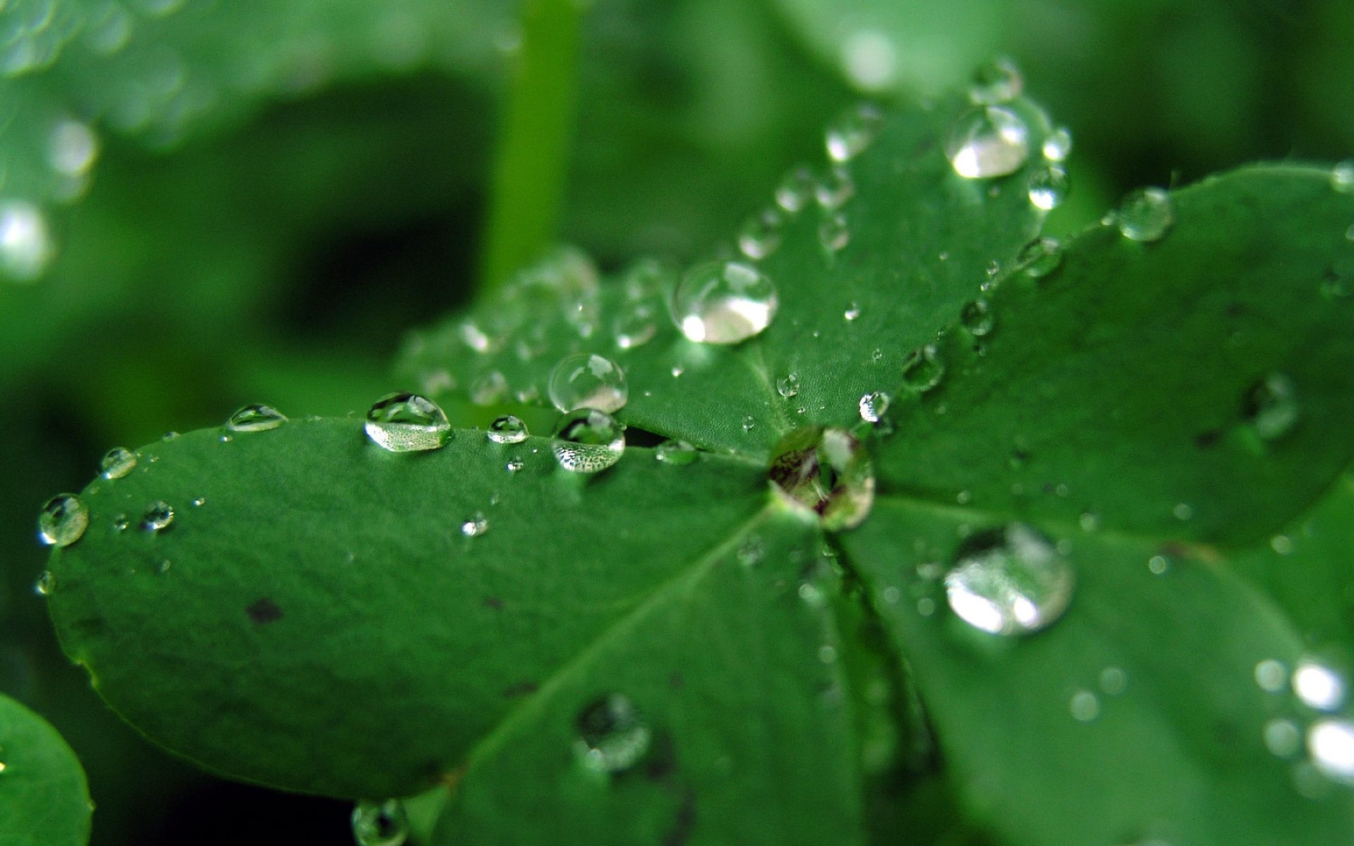 Macro Water Drop Nature S For Android Wallpaper