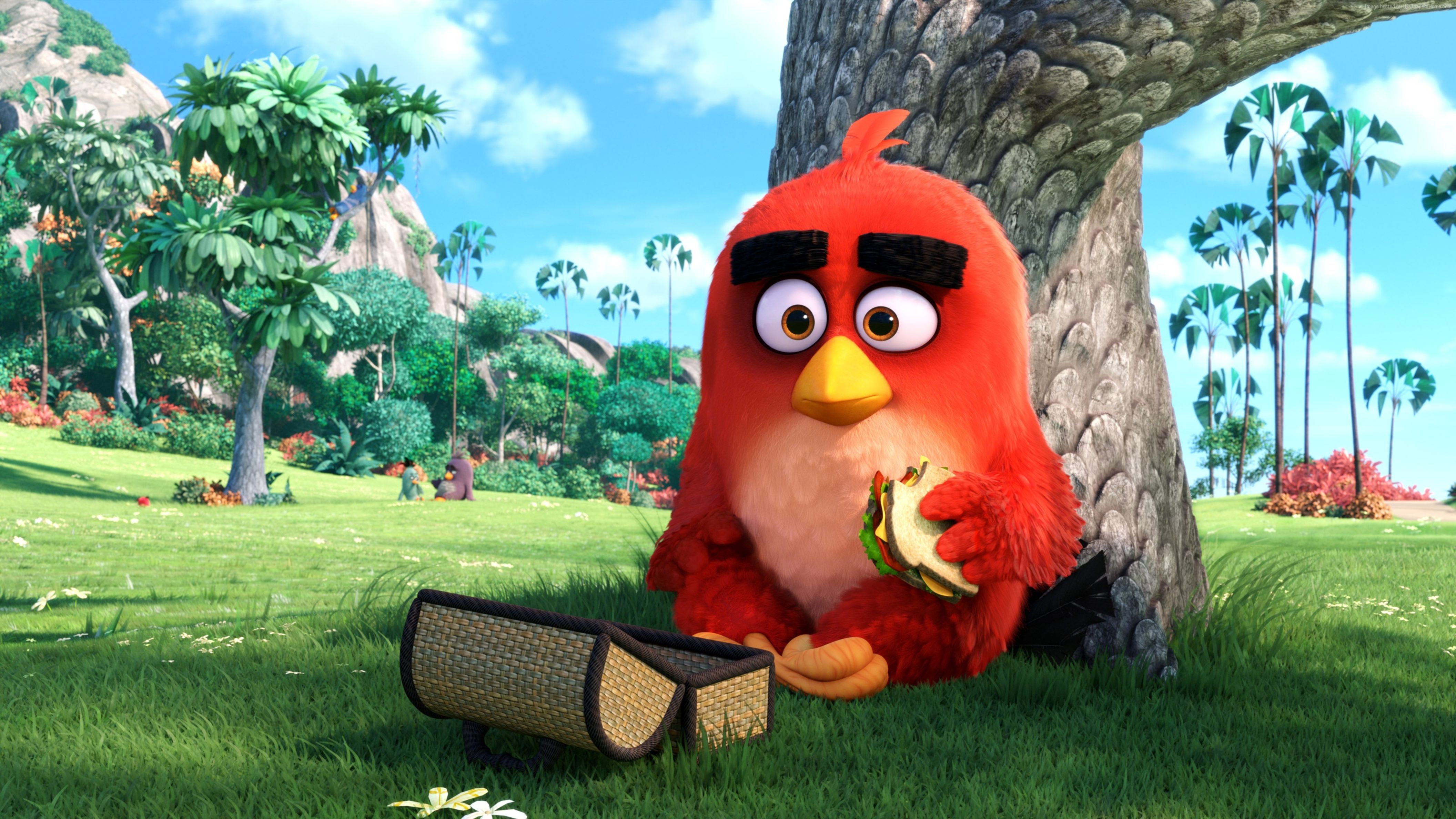red angry birds movie hd wallpaper: desktop hd wallpaper - download