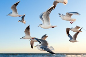 Seagulls Wide Wallpaper