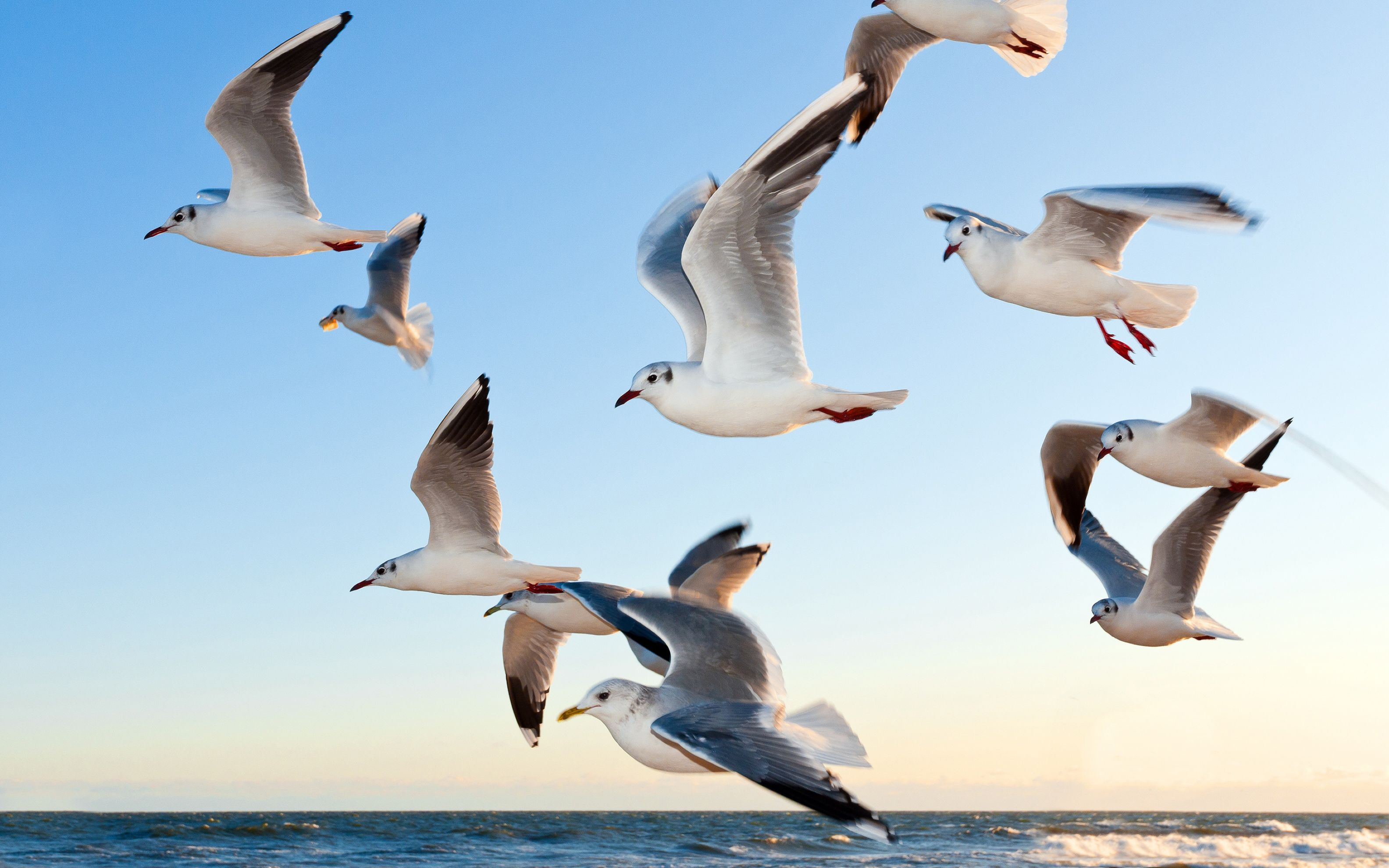 Download free HD Seagulls Wide Wallpaper, image