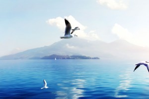 Seagulls in Switzerland Wide Wallpaper