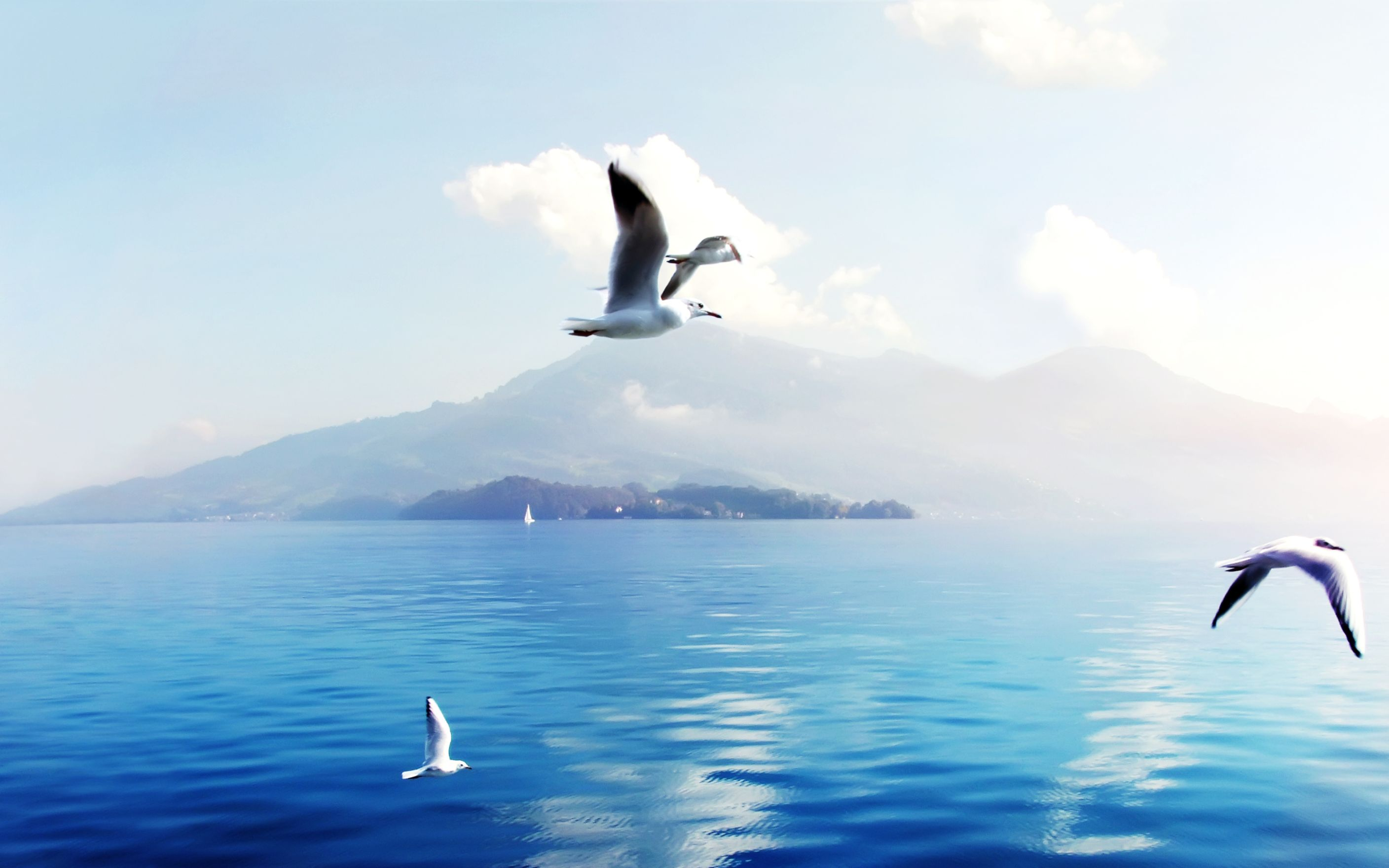 Download free HD Seagulls in Switzerland Wide Wallpaper, image
