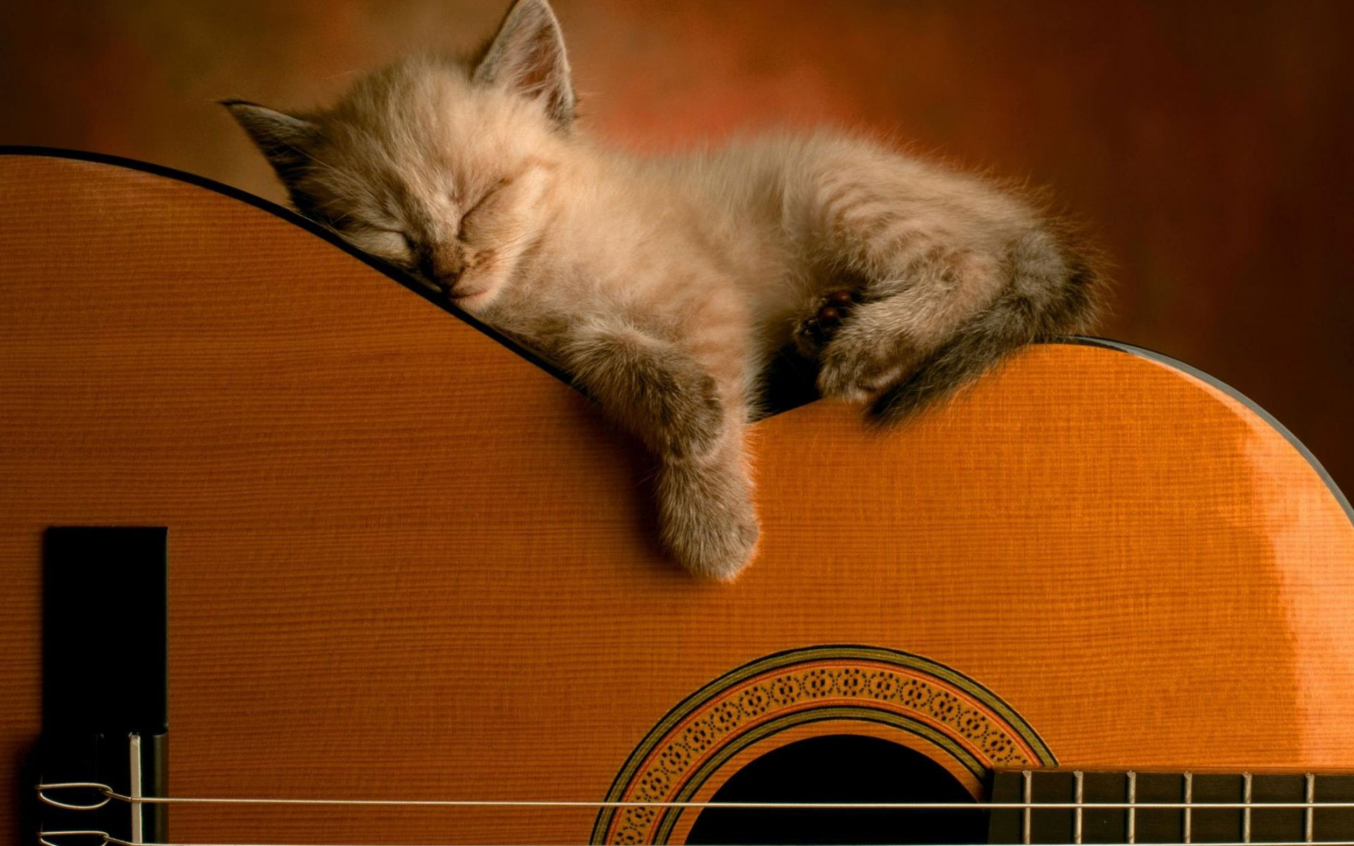 Sleeping Soundly Wide Wallpaper