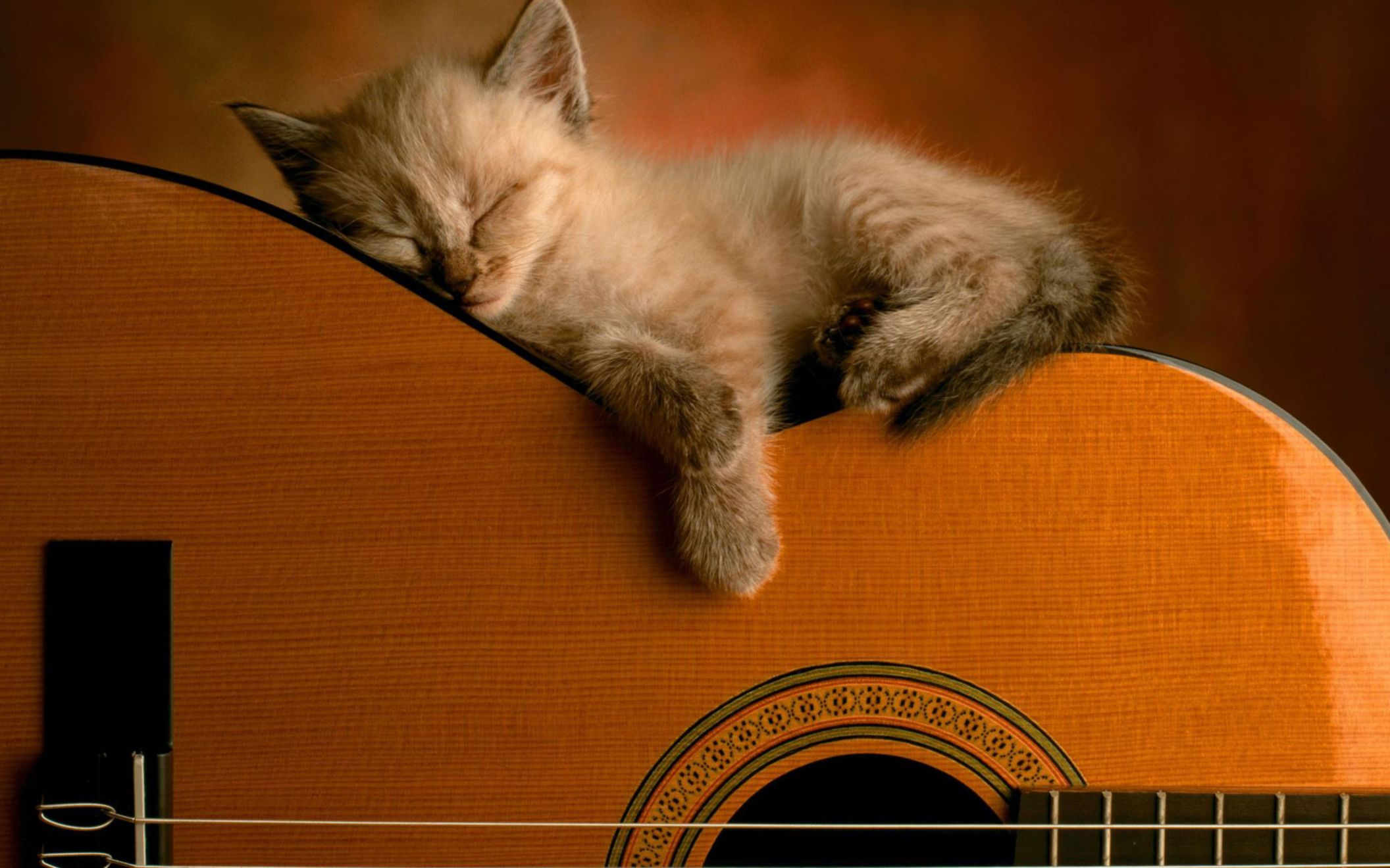 Download free HD Sleeping Soundly Wide Wallpaper, image
