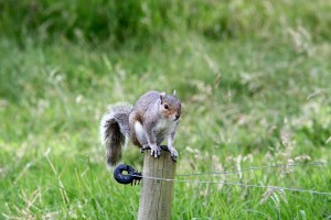 Download Squirrel Wallpaper Free Wallpaper on dailyhdwallpaper.com