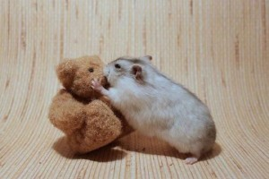 Teddy Bear Kissed By Hamster Wallpaper
