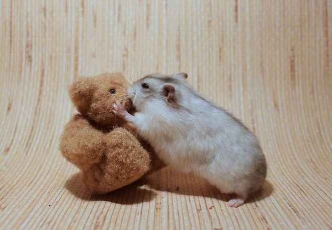 Download free HD Teddy Bear Kissed By Hamster Wallpaper, image