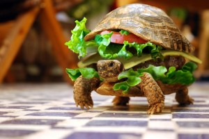 Turtle Funny Wallpaper