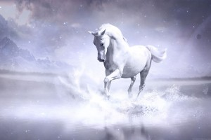 White Horse Wide Wallpaper