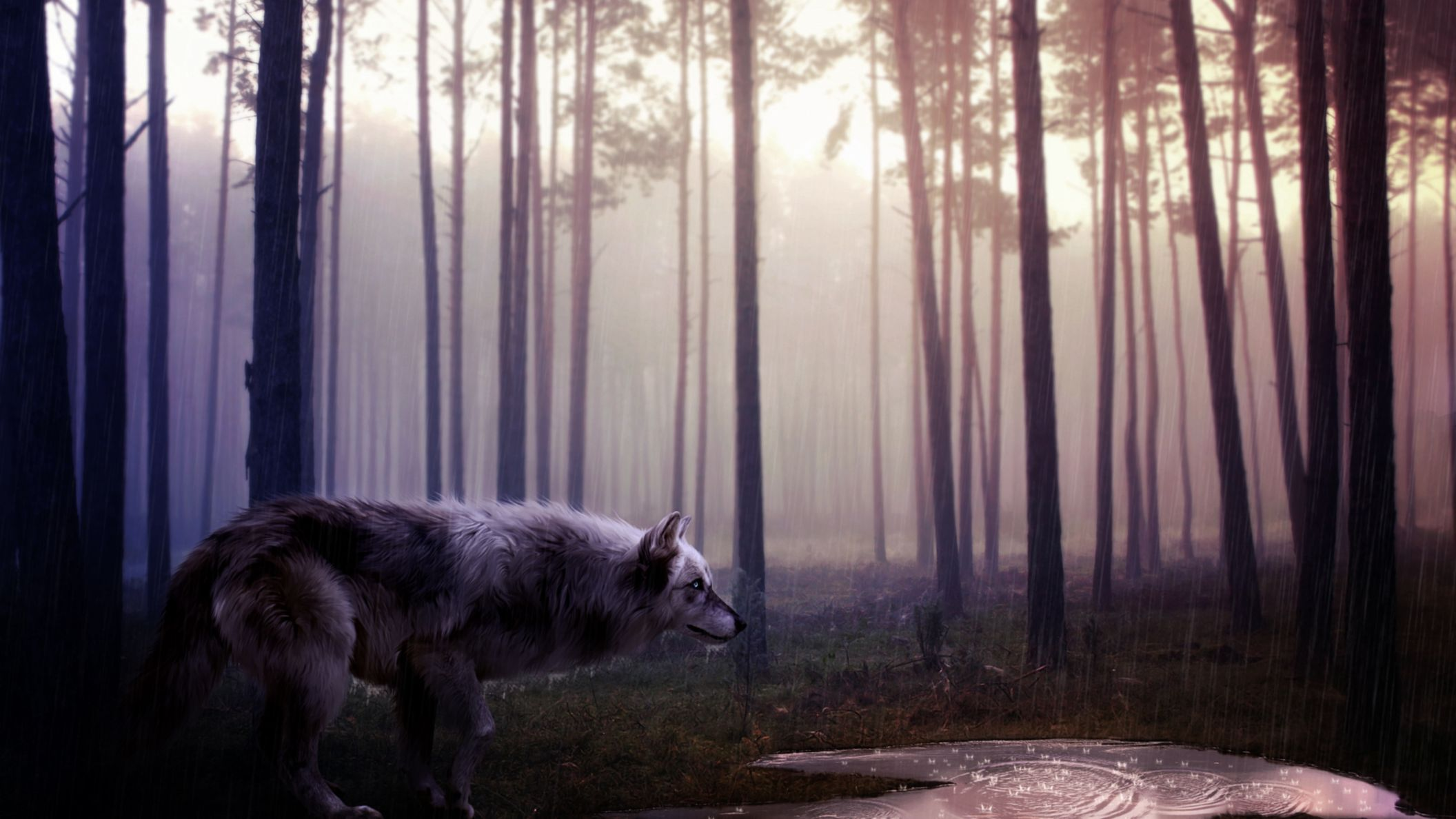 Download free HD Wild Wolf HD Wallpaper, image
