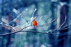 Download Winter Tree Leaf Wide Wallpaper Free Wallpaper on dailyhdwallpaper.com