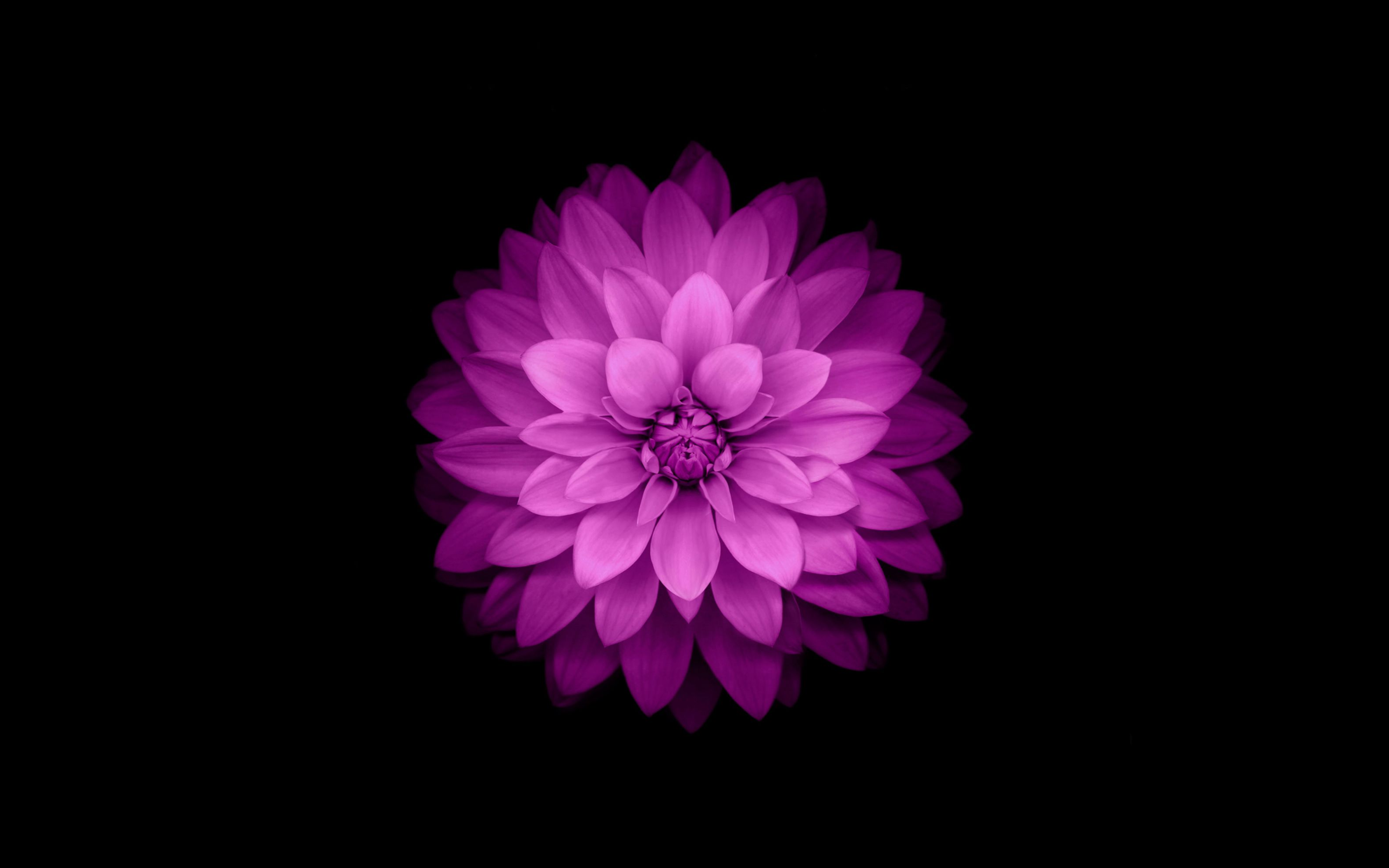 Download free HD iPhone Flower Wide Wallpaper, image